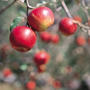 사과(부사) 5kg=13~ 14과